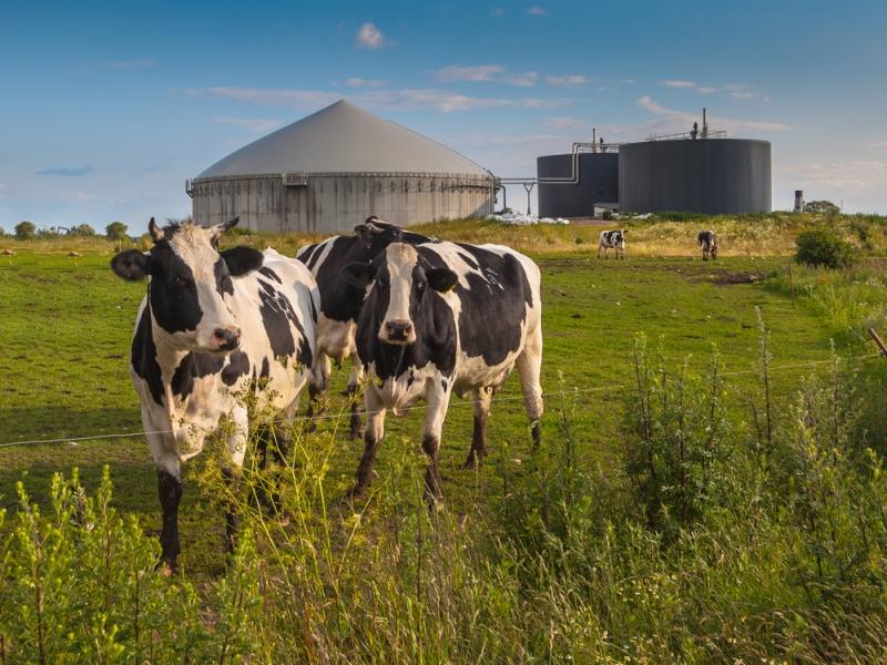 M5S Lombardia contro gli impianti a biogas. Gli risponde punto per punto il CIB | QualEnergia.it